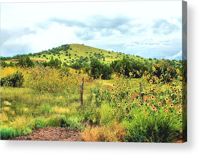 Photography Acrylic Print featuring the photograph Springerville Sunflowers 0060 by Sharon Broucek
