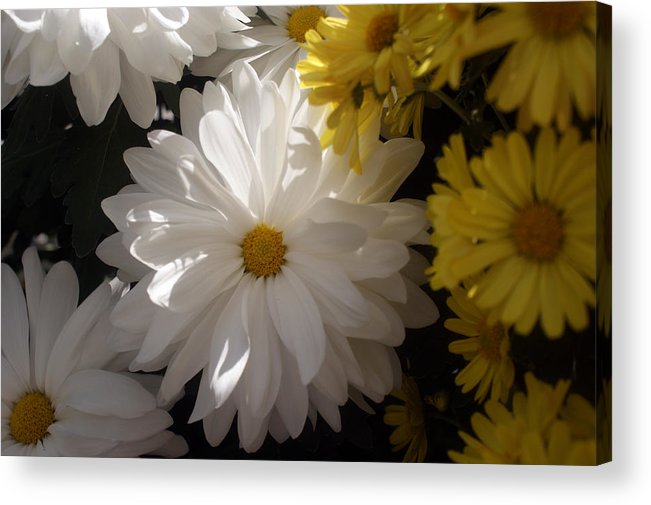 Flower Acrylic Print featuring the photograph Standing Out In A Crowd by Kat Dee