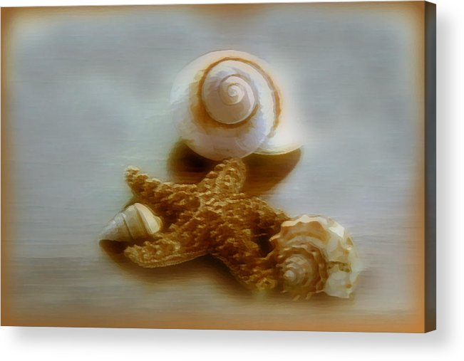 Beach Art Acrylic Print featuring the photograph Star And Shells by Linda Sannuti