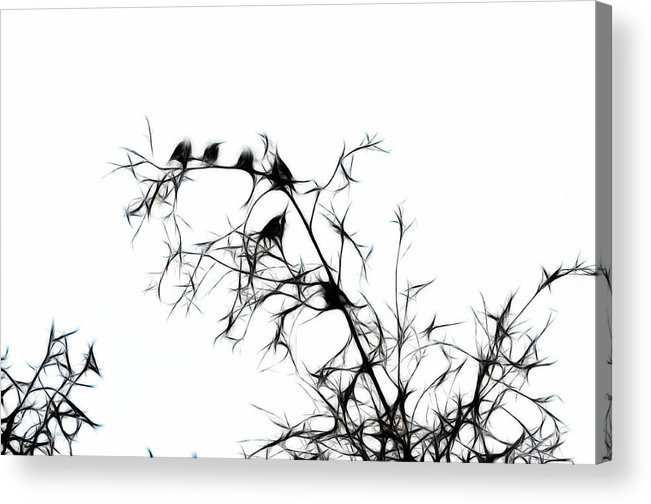 Bird Acrylic Print featuring the photograph Starlings by Lawrence Christopher
