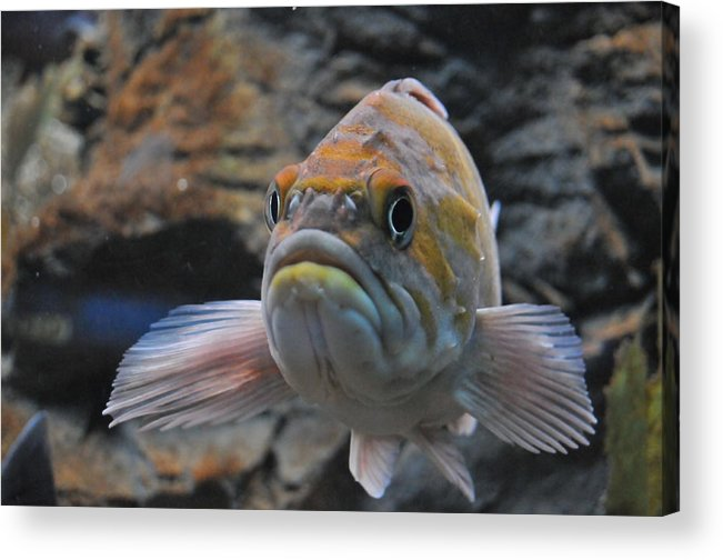 Fish Acrylic Print featuring the photograph Stop Staring by Jennifer Englehardt