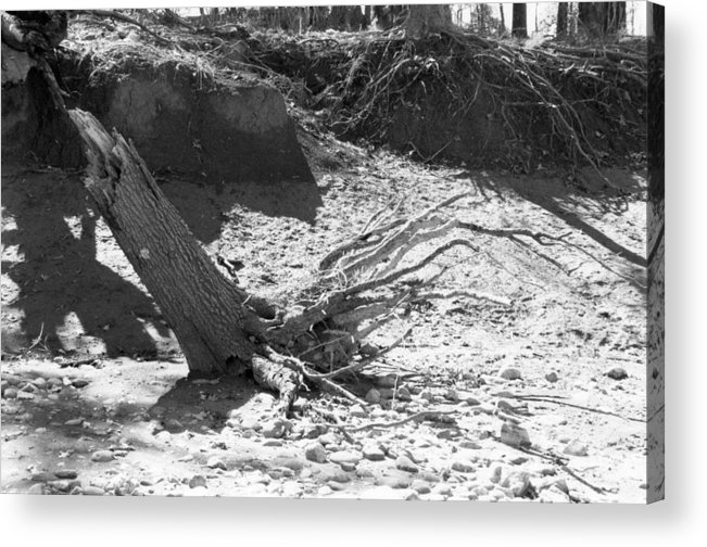 Stump Acrylic Print featuring the photograph Stump In The Sand by Steven Crown