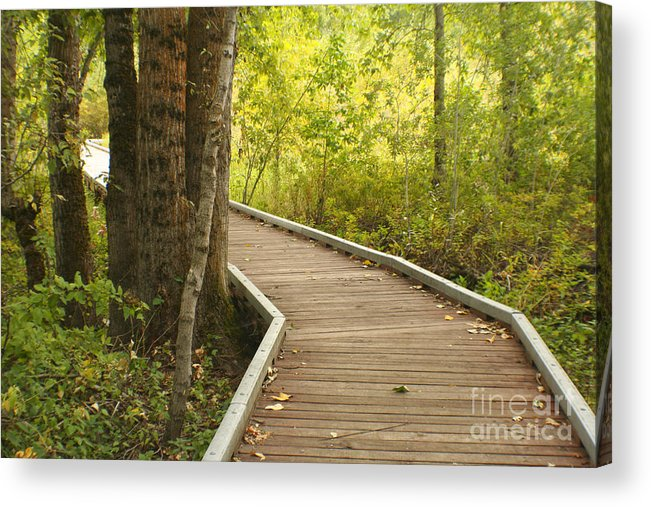 Trail Acrylic Print featuring the photograph Summer Walk by Idaho Scenic Images Linda Lantzy