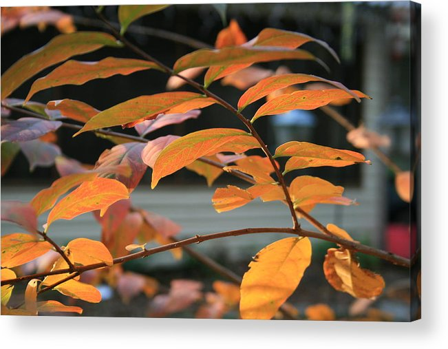 Fall Acrylic Print featuring the photograph Sun Shing Through by Linda Ebarb