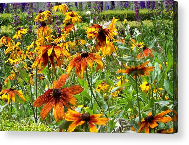 Sunflowers Acrylic Print featuring the photograph Sunflowers And Friends by Jean Booth