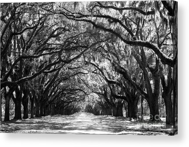 Live Oaks Acrylic Print featuring the photograph Sunny Southern Day - Black And White by Carol Groenen