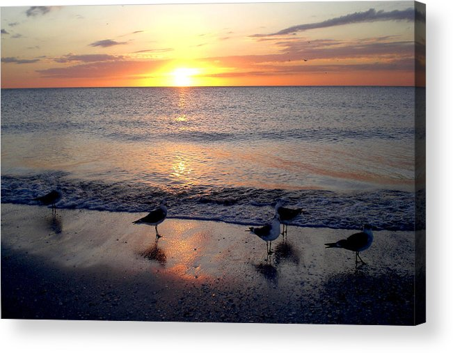 Seagulls Acrylic Print featuring the photograph Sunset Birds by Phil Bishop