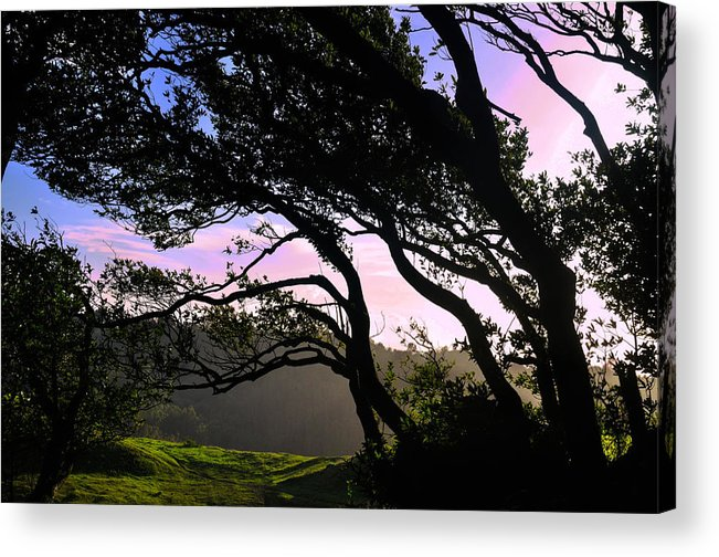 Nature Acrylic Print featuring the photograph Sunset Trees by Scarlet Starr