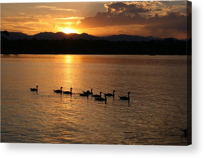 Sunset Acrylic Print featuring the photograph Sunset With Geese 2 by Angie Wingerd