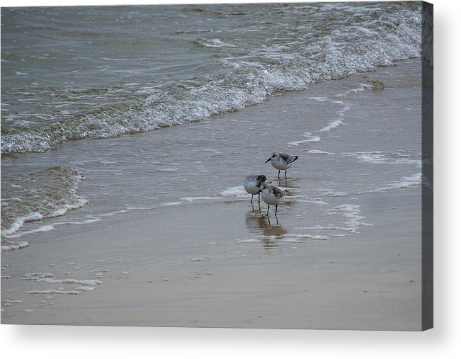 Birds Acrylic Print featuring the photograph Surf And Birds by Judy Smith