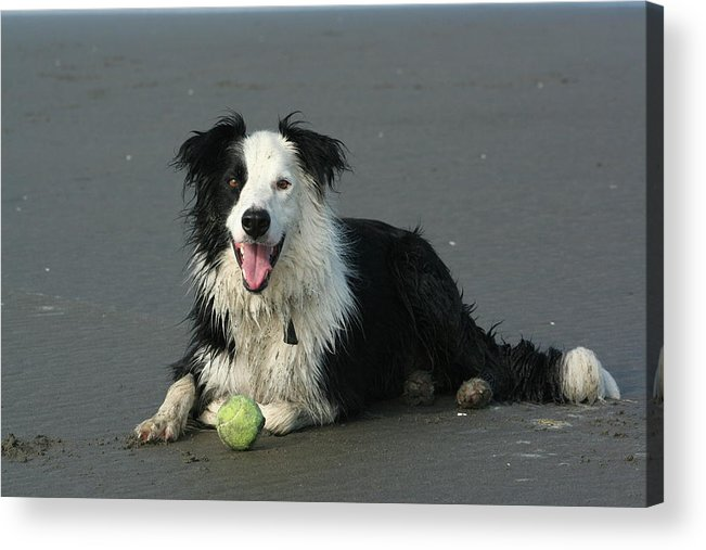 Dog Acrylic Print featuring the photograph Taking Five by JoJo Photography
