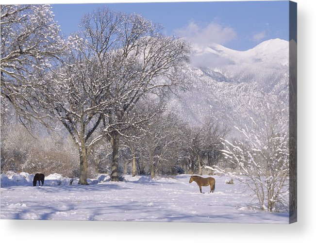 Landscape Acrylic Print featuring the print Taos January 2008 by Lynard Stroud
