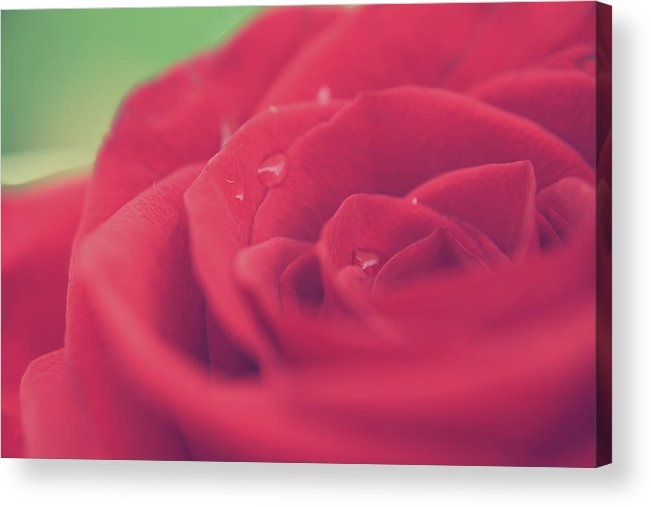 Macro Acrylic Print featuring the photograph Tears Of Love by Laurie Search