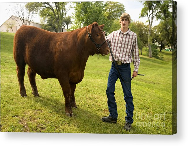 Steer Acrylic Print featuring the photograph Teen And Red Angus Steer by  Inga Spence