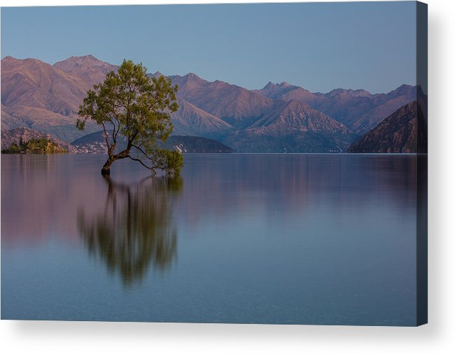 Tree Acrylic Print featuring the photograph That Tree - Wanaka by Steven Hirsch