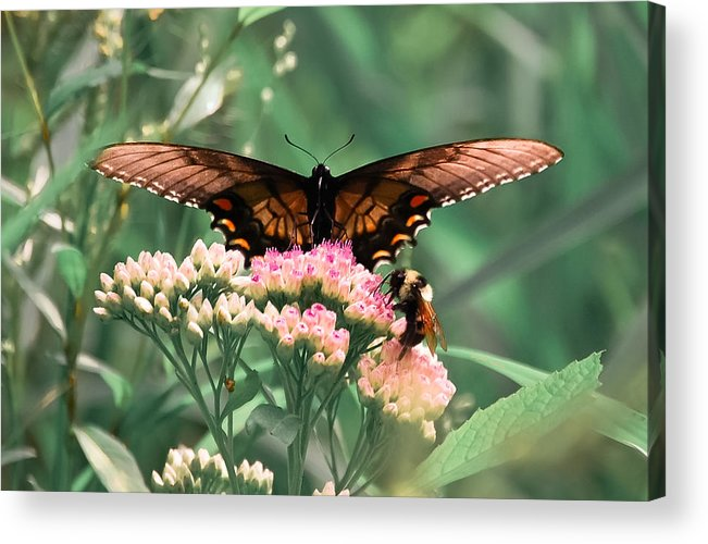 Butterfly Acrylic Print featuring the digital art The Butterfly And The Bumblebee by DigiArt Diaries by Vicky B Fuller