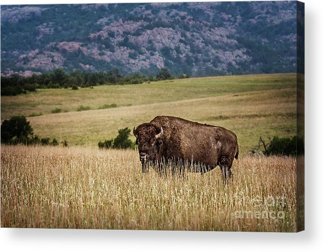 Buffalo Acrylic Print featuring the photograph The Days End by Tamyra Ayles