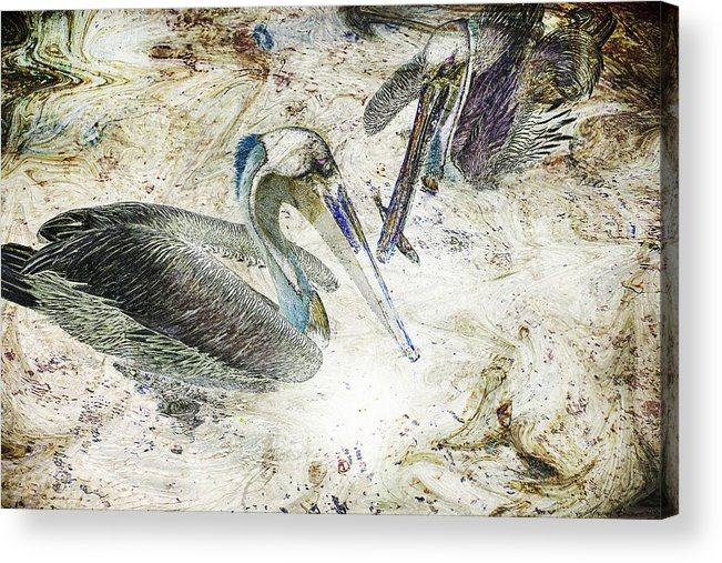 Pelicans Acrylic Print featuring the photograph The Fishing Hole by Yvonne Emerson