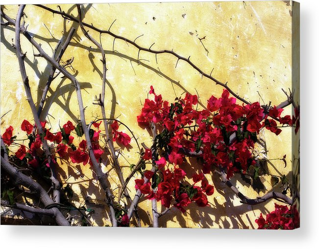 Photo Acrylic Print featuring the photograph The Flowers Of Carmel 2 by Alan Hausenflock