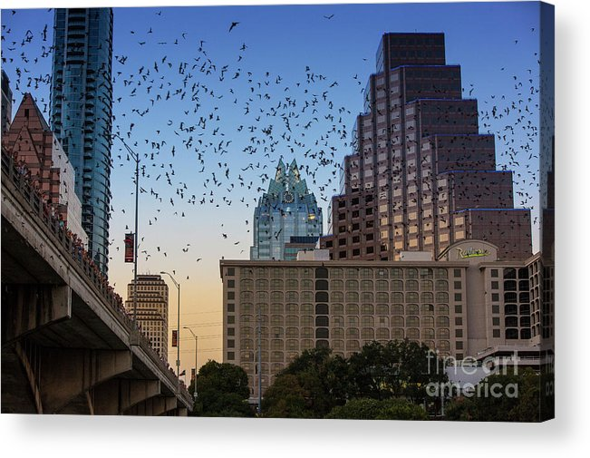 Austin Bats Hotline Acrylic Print featuring the photograph The Frost Bank Tower Stands Guard As 1.5 Million Mexican Free-tail Bats Overtake The Austin Skyline As They Exit The Congress Avenue Bridge by Austin Welcome Center