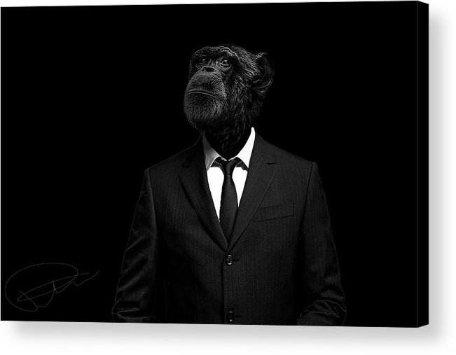 Chimpanzee Acrylic Print featuring the photograph The Interview by Paul Neville