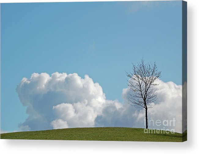 Lone Tree Acrylic Print featuring the photograph The Lonely Tree by Mark Hughes