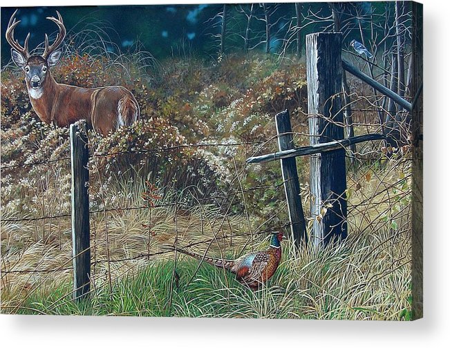 Whitetail Acrylic Print featuring the painting The Neighbor's Gate by Bethany Caskey