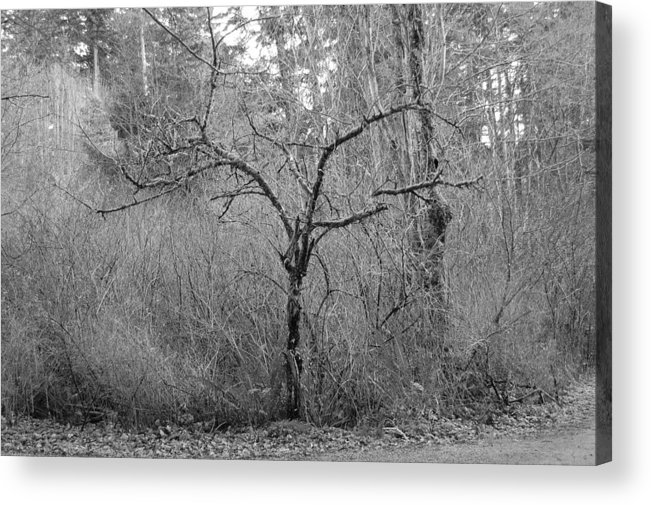 Black Acrylic Print featuring the photograph The Scary Little Tree by J D Banks