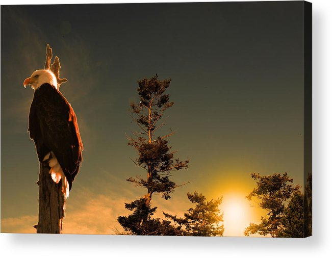 Eagle Acrylic Print featuring the photograph The Watcher by Lawrence Christopher