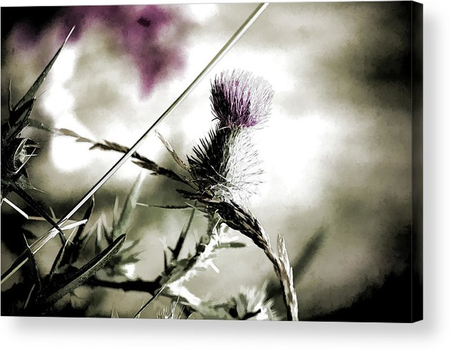 Thistle Acrylic Print featuring the photograph Thistle by Bonnie Bruno