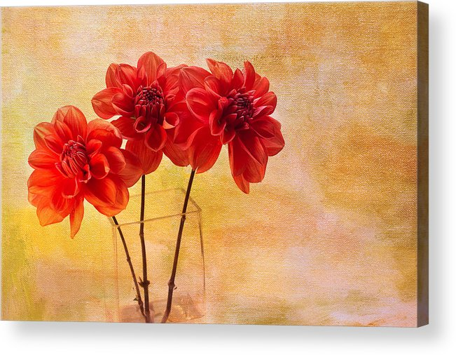 Dahlias Acrylic Print featuring the photograph Three Orange Dahlias by Rebecca Cozart