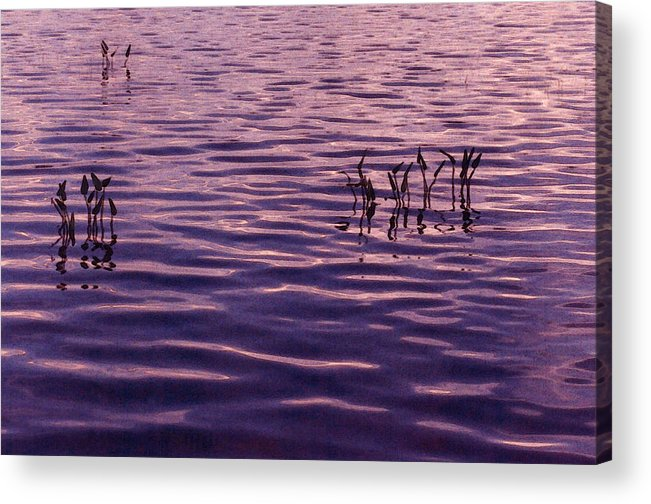 Sunset Acrylic Print featuring the photograph Three Plants by Lyle Crump