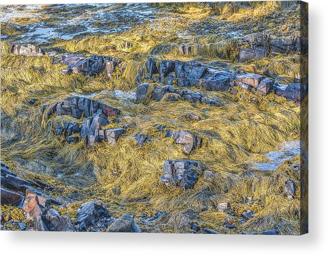 Acadia Acrylic Print featuring the photograph Thunder Hole - Sunny Seaweed by Black Brook Photography