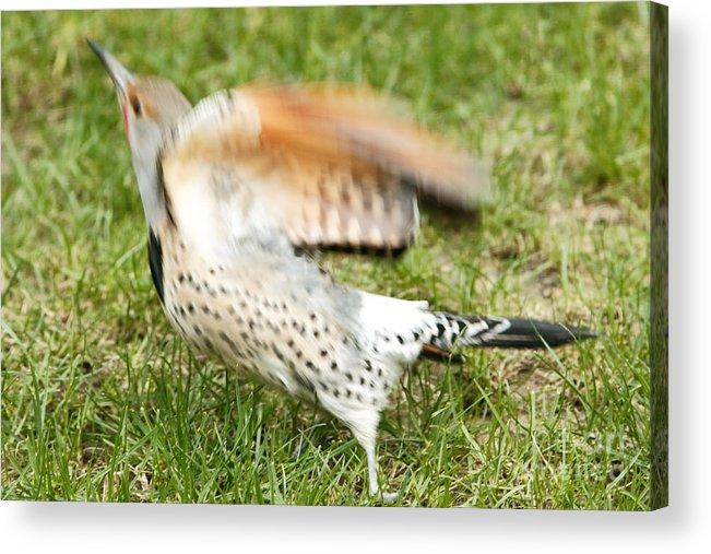 Flicker Acrylic Print featuring the photograph Time To Leave by Marland Howard