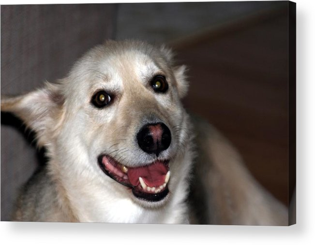 Dog Acrylic Print featuring the photograph Toby by Gregory Jeffries