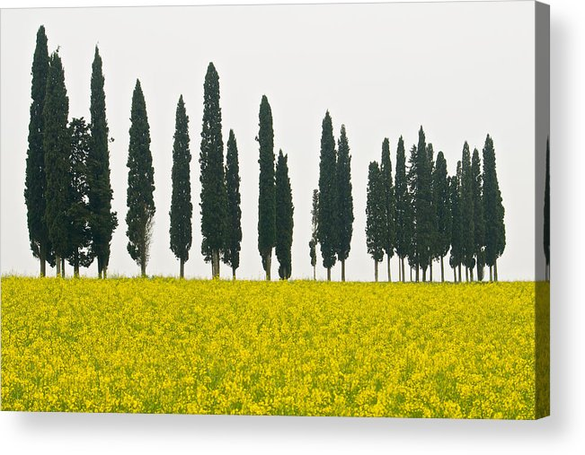 Landscape Acrylic Print featuring the photograph Toscana Cypresses by Igor Voljch