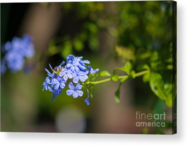 Landscape Acrylic Print featuring the photograph Tranquility by Melinda Pritzel
