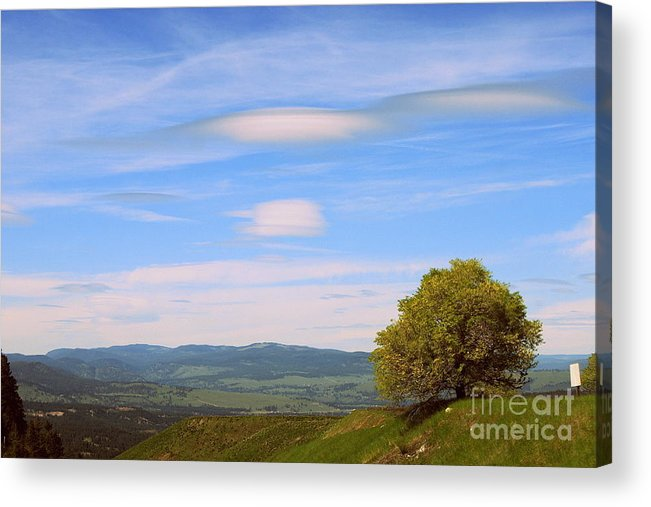 Tree Acrylic Print featuring the photograph Tree In Landscape by Samiksa Art