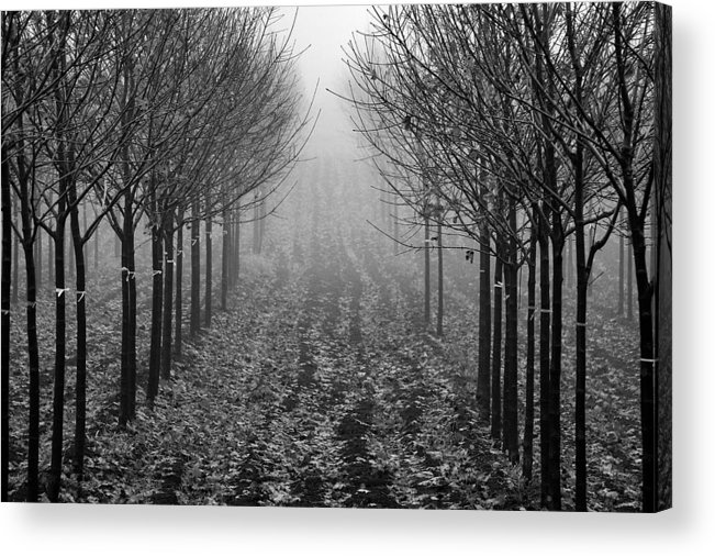 'trees Acrylic Print featuring the photograph Tree Line by David Hubbs