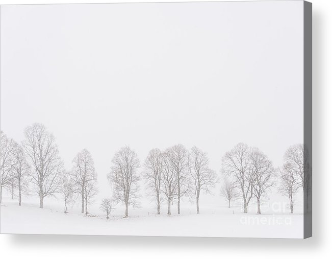 Winter Acrylic Print featuring the photograph Trees In A White Landscape In A Blizzard by IPics Photography