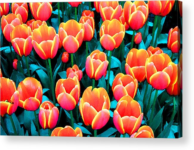 Acrylic Print featuring the photograph Tulips In Holland by Gene Sizemore