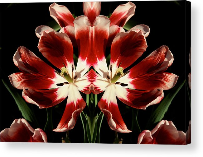 Tulips Acrylic Print featuring the photograph Twin Tulips by Bruce Richardson