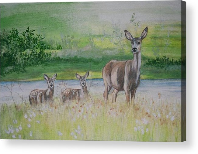 Whitetail Deer Acrylic Print featuring the painting Twins In The Quabin by Debra Sandstrom