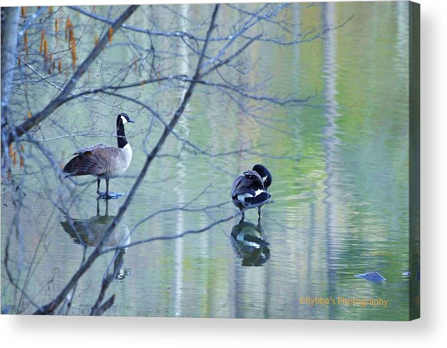 Two Geese Acrylic Print featuring the photograph Two Geese On A Lake by Ruth Yvonne Ash