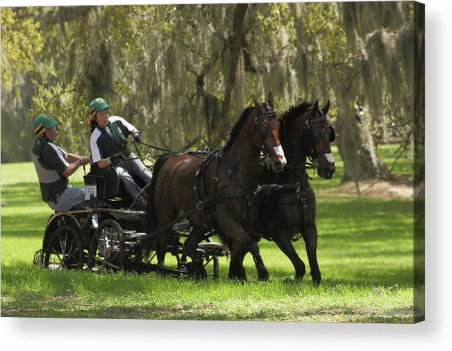 Horse Acrylic Print featuring the photograph Two Hands by Jamie Smith