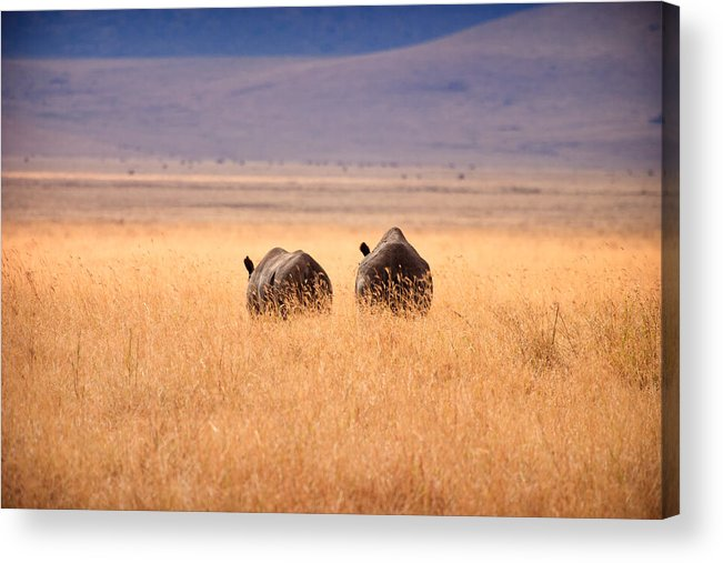 3scape Photos Acrylic Print featuring the photograph Two Rhino's by Adam Romanowicz