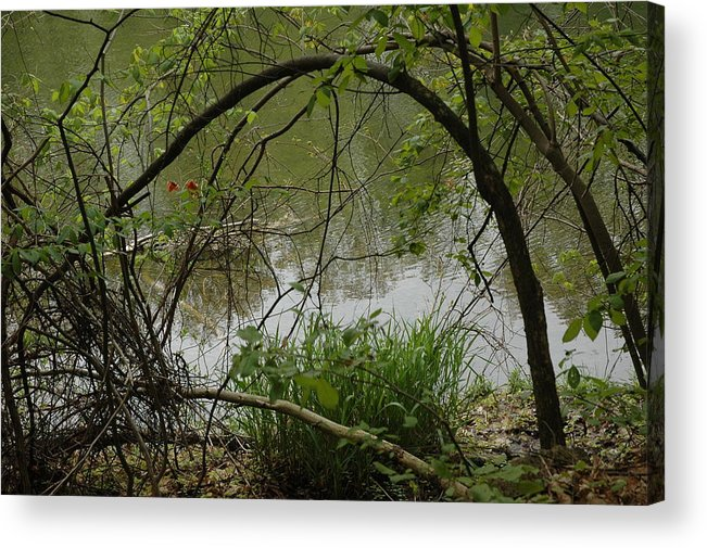 Landscapes Acrylic Print featuring the photograph Under The Wild Wood Arch by LeeAnn McLaneGoetz McLaneGoetzStudioLLCcom