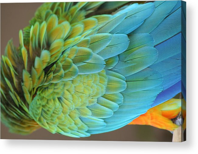 Back Acrylic Print featuring the photograph Unique Macaw by Anita Parker