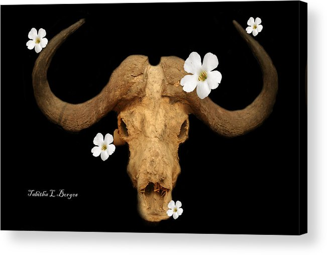 Skull Acrylic Print featuring the photograph Untitled by Tabitha Borges