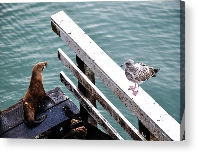Seagull Acrylic Print featuring the photograph Unusual Friends by Scarlet Starr